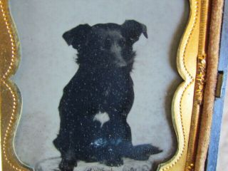 Small Dog With One Chest Spot Sitting On A Table Ambrotype Photo In Thermo Case