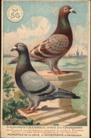 Pigeons Bird Feed Food Smg Selections Maxima Gembloux C1910 Postcard