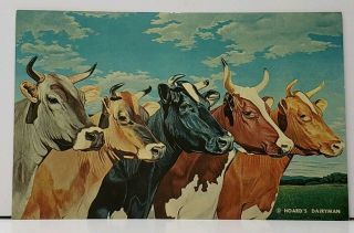 Hoards Dairyman Cows Five Queens 1961 Advertising Postcard H4