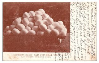 1907 Minorca Eggs,  Can You Beat