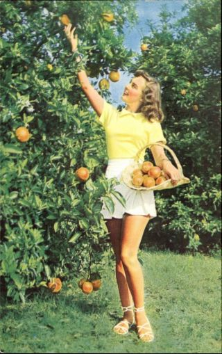 Sexy Young Woman Picking Oranges Waverly Florida Fl Advertising Postcard