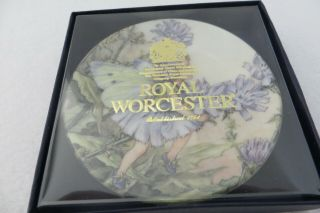 "Royal Worcester Chicory Flower Fairies 3.  75 "" Mini Plate - Cicely Barker - Mib"