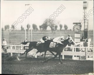 1929 California Tijuana Race Track Horses Close At Finish Press Photo